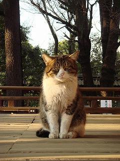 根津神社の猫ちゃん
