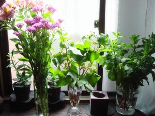 大宮のお花