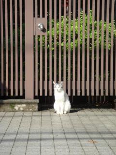 諏訪台通りの猫