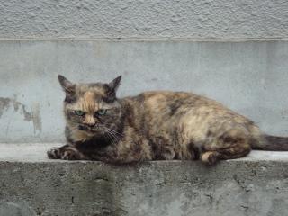 麻生太郎顔猫