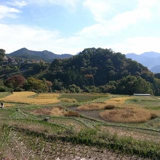 鎌倉時代の寺坂棚田復元
