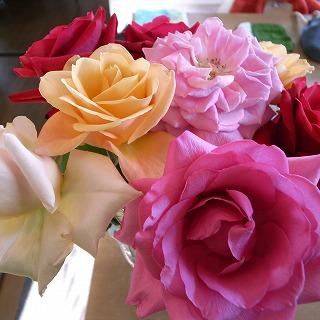 のりこの薔薇
