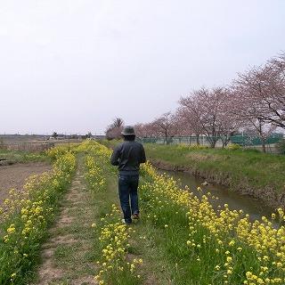 菜の花とおじさん