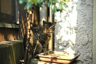 まぶしい猫1