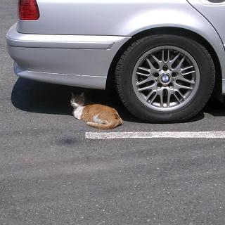 まぶしい猫2