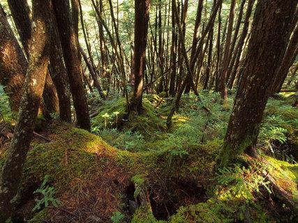 金峰山?樹林帯