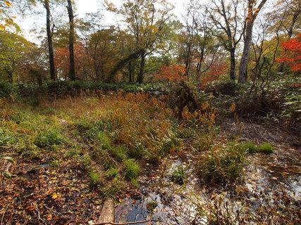 奥利根水源の森・荒れ地