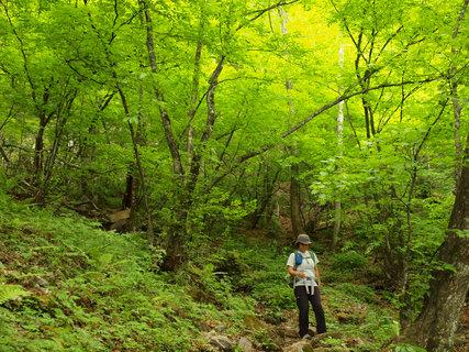 20120527両神山4