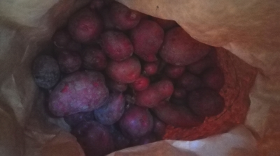 赤いジャガイモ