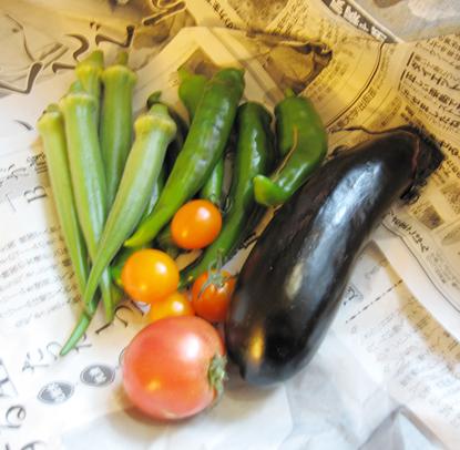 晴苗農園の野菜たち
