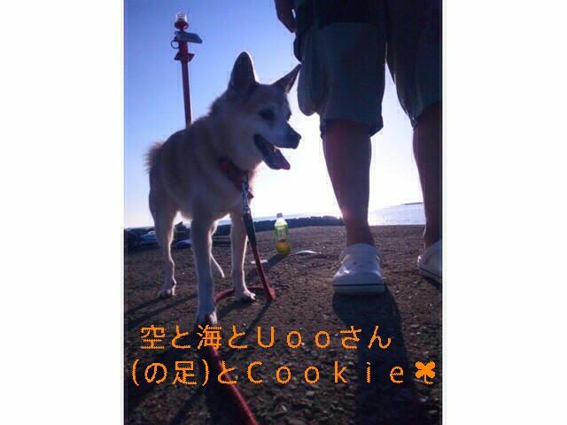 クッキーと海とおっさんの足