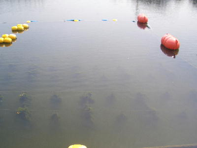 等々力釣り池4
