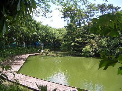 釣り池4.jpg
