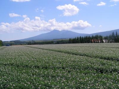 斜里岳とジャガイモ畑
