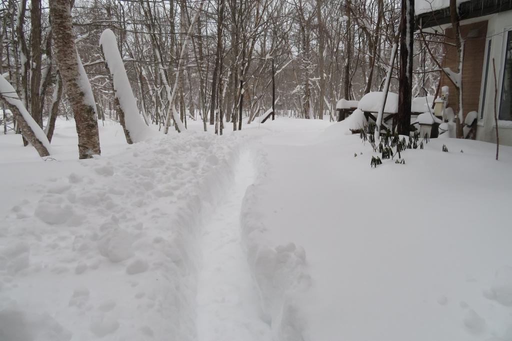 この冬初のまとまった雪