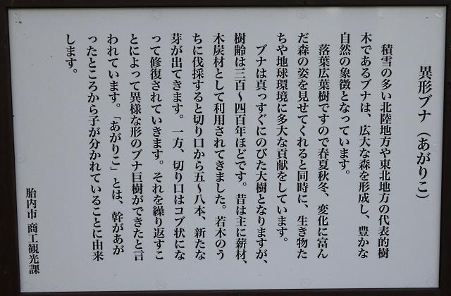 201011_13.jpg