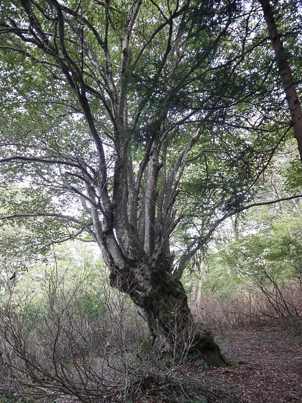 201011_14.jpg