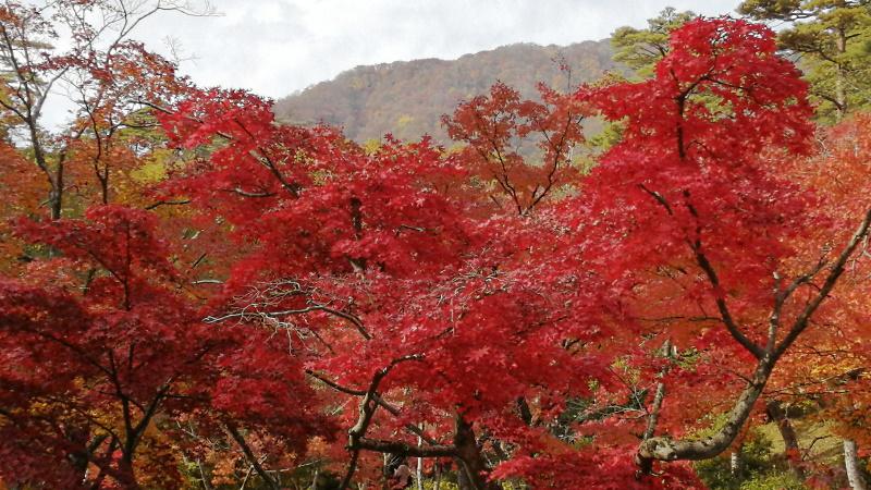 もみじ谷_201113_03.jpg