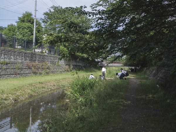 野川で水質検査をする中学生