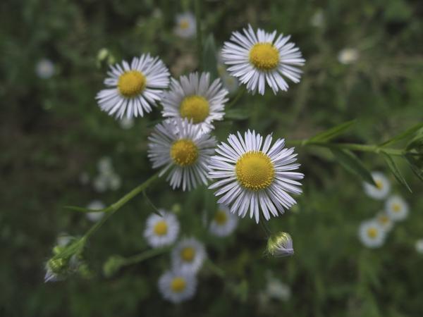野川の野花