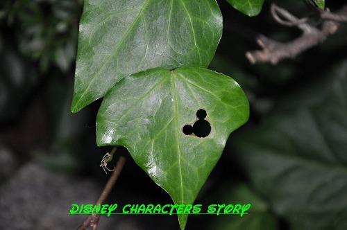 ディズニーの噂・裏技・裏話_葉っぱに隠れミッキー