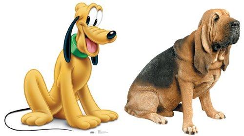 ディズニーの噂・裏技・裏話_プルートの犬種はブラッドハウンド