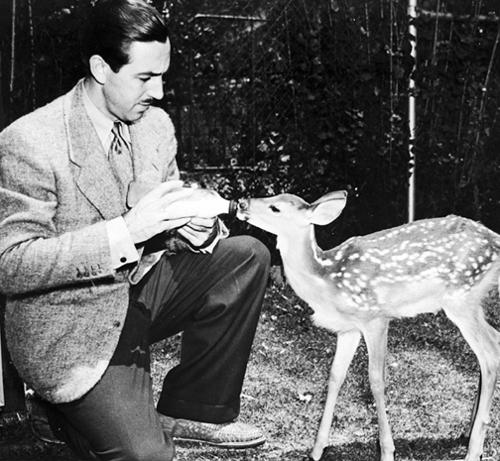 ディズニーの噂・裏技・裏話_ディズニースタジオを鹿が走り回っていた