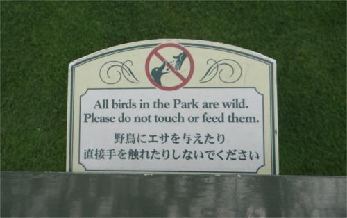 ディズニーの噂・裏技・裏話_パーク内のカモは飼われている?それとも野鳥?