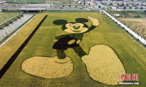 ディズニー雑学・トリビア・裏話_上海ディズニーランドのオープンを記念して巨大なミッキー田んぼアートが登場