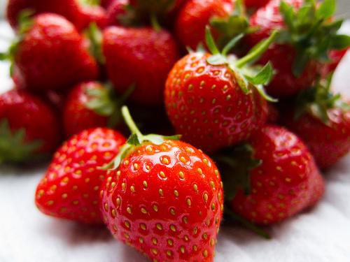 オリエンタルランドが東京ディズニーリゾートで提供するイチゴを自社生産_3