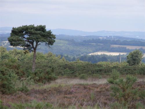 プーさんが住む100エーカーの森のモデルとなった場所_2