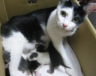 「猫 子供産む」の画像検索結果