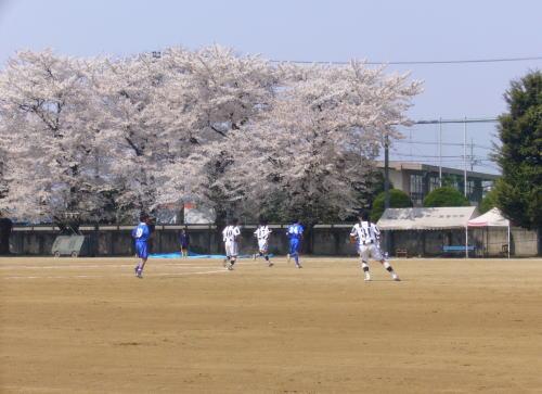 深谷第一高校にて花見サッカー
