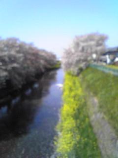 唐沢川の春
