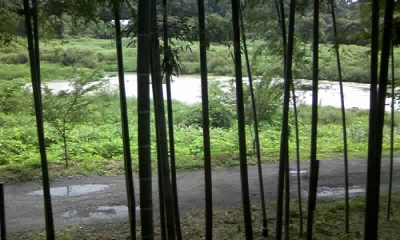かりん糖屋さんの裏の竹林