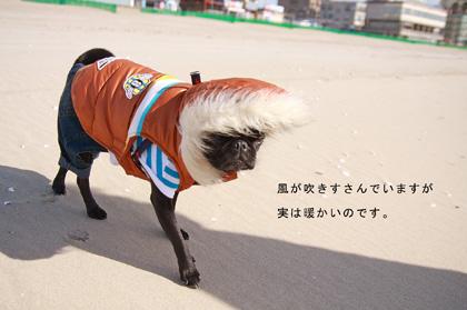 風は強いけど