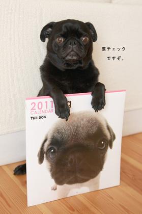 夫もおすすめThe Dogのカレンダー