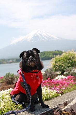 富士山をバックに♪