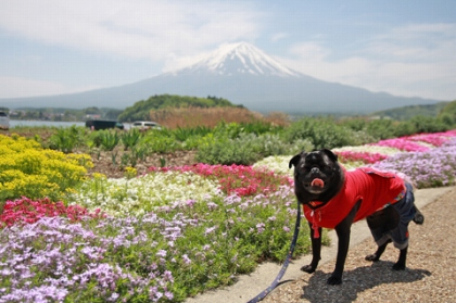 富士山がきれいに見えます!