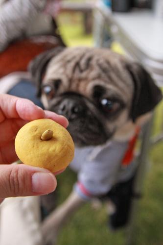 クッキーもらった♪