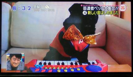 弾いてます〜!