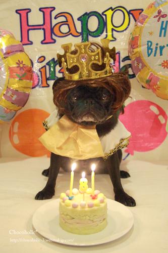 チョコ王子のお誕生日♪