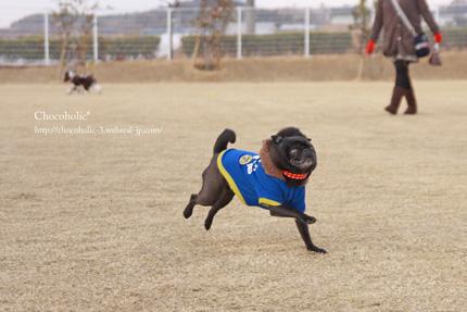 おらー!走れー!