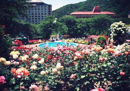 花巻のバラ園