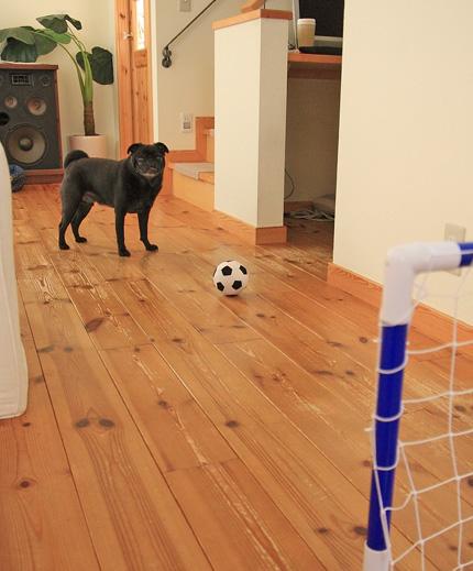 サッカーやります!