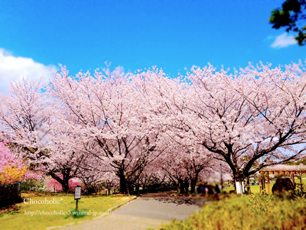 青い空に満開の桜
