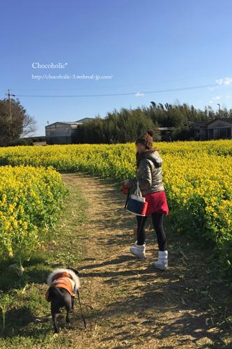 加治菜の花畑