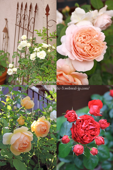 庭のバラたち