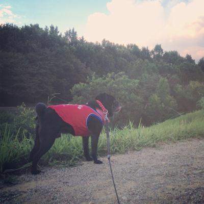 夏のお散歩