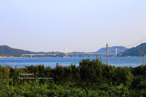 みかん畑と瀬戸内海